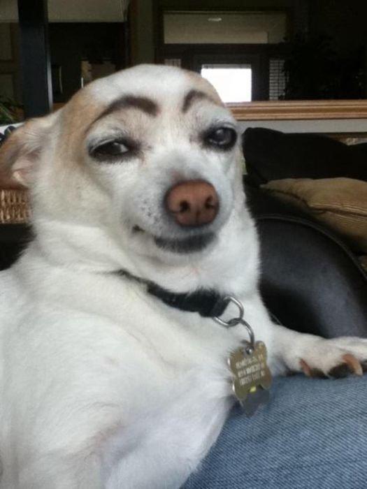 Ren or Stimpy. .. <------- lol Dog funny WTF FUNNYJUNK