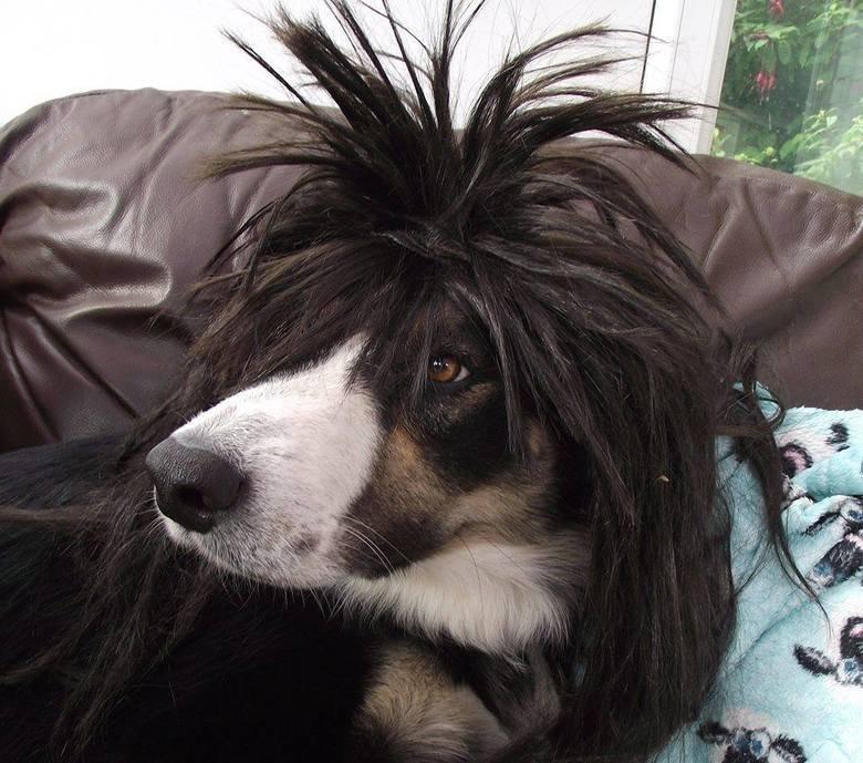 Rocker Dog. dat 80s rocker hair.. God damnit I just finnished watching FMA Brotherhood. Dogs