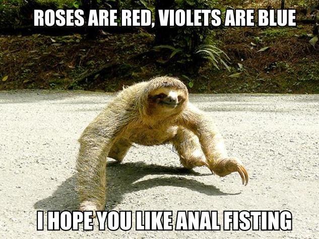 Romantic Sloth. . Romantic Sloth