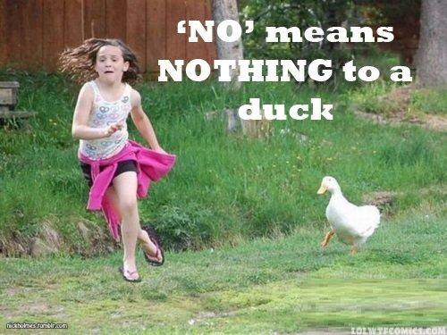 Rude duck. Not OC. Duck
