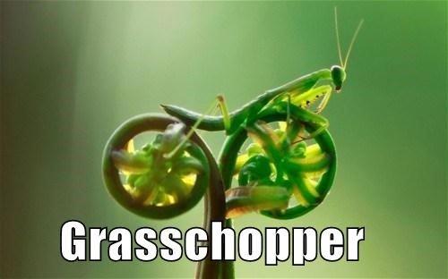 Veddy well Grasschoppa. Ummm hmmm. grasshopper grasschopper