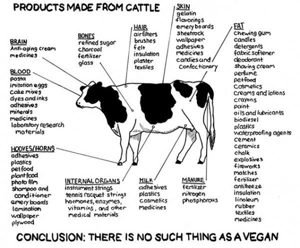VEGANS. You mad Vegans?. and ' admire: {Hwy ttji% titta rt' -minis meat Prints teigen insulation hung; humans. mayaha, ' ts ' reir.. m la: - , and war medicines vegans
