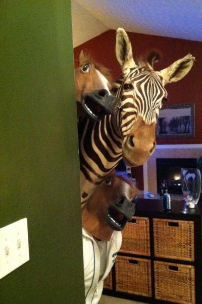 zebra mask. zebra mask.. i have find a zebra from zebra mask