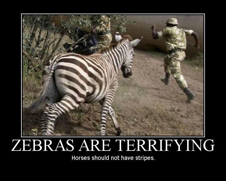 zebras. .. ZEBRA SHOULDNT BE CHASING HIM BLACK MAN FASTER. zebras ZEBRA SHOULDNT BE CHASING HIM BLACK MAN FASTER