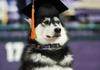 College Graduate Dog