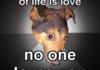 Depression Dog
