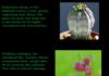Epic Plants 2