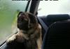 Poor Pug..