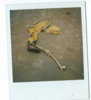 monsieurslender Avatar