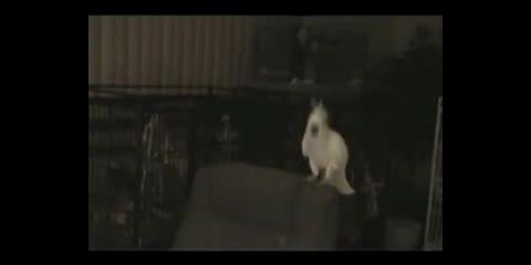 Snowball. .. birds love music