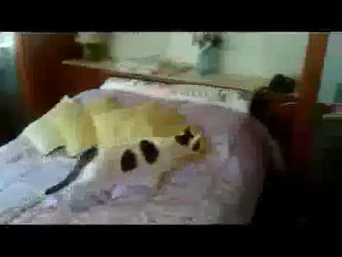 troll cat. meow meow, meow! meow meow meow?.. oh...my goodness