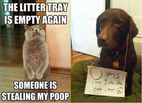 Bad Dog. . HE THAN IS mm manna wtt' miimii' IS i MY Poor Bad Dog HE THAN IS mm manna wtt' miimii' i MY Poor
