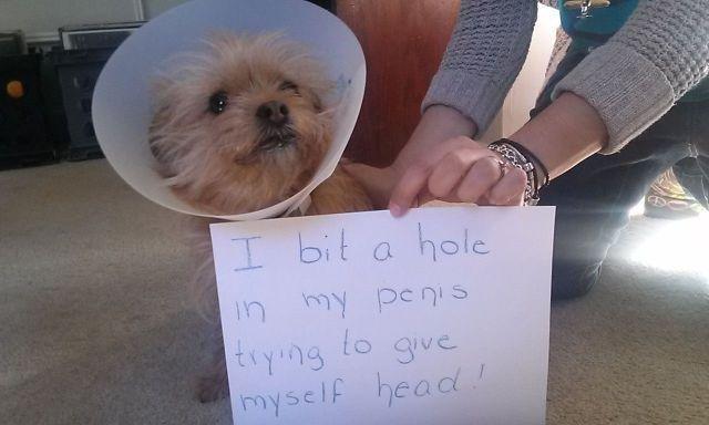 Bad dog. . Bad dog