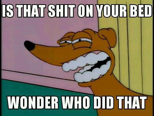 BAD DOG. . IS THAT SHIT tait VINE Brill WITHIN! mo BID THAT lol bad Dog