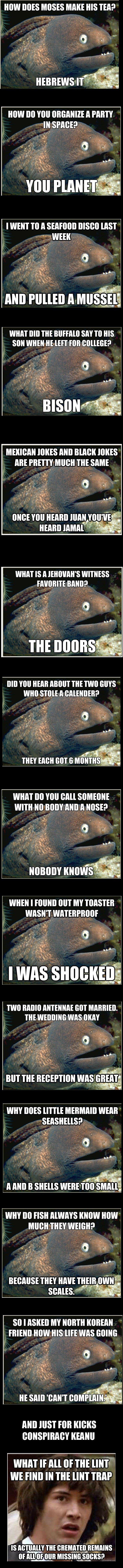Bad Joke Eel Compilation. My Comp/Mien Kompf. bad joke eel is he doing it right