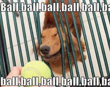 BALL!. . tiill xx xx. walk walk walk walk walk walk walk!! food foood fooooood food food food food!!!!!!! TREAT?! TREAT!! TREAT!!!?!?!!!!!11!!!!!!?!?! TREEEEEEAAAAAT!!! Ball Dog fence bend