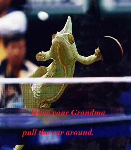 Balls of lizard fury. Thats one badass lizard. lizard Ping Pong