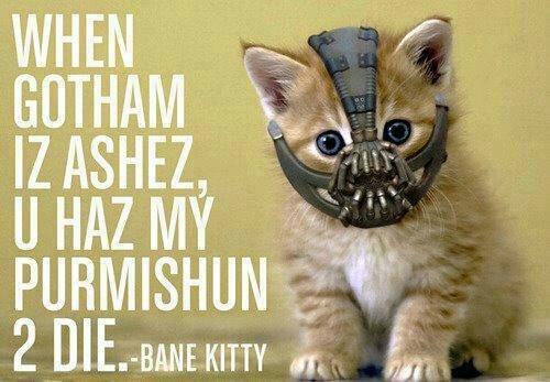 Bane Kitty. Soft kitty warm kitty little ball of fur..... bane kitty acually is dolan. Bane Kitty Soft kitty warm little ball of fur bane acually is dolan
