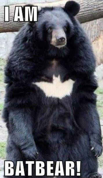 Batbear. Not sure if repost. Source: www.facebook.com/TimmyEffingTurner. a, imagi. I am the hero Catham deserves bat Bear batbear batman funny picture