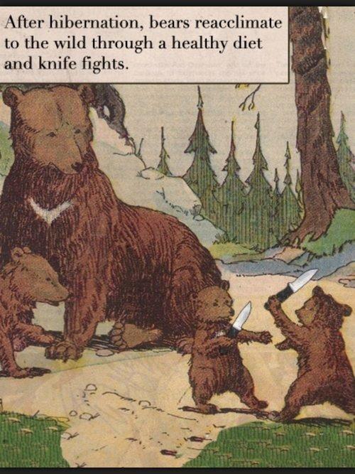 Bear fight club. Rule 1 of bear, dont question Da Bears. After '! ream:: linnet. e and knife :. Just wait till they evolve. DA BEARS