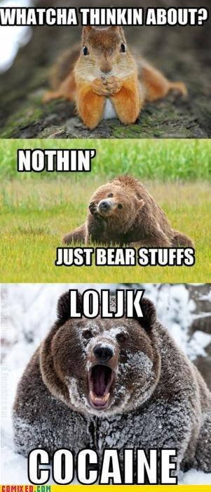 Bear stuffs. . HIST , Bear stuffs HIST
