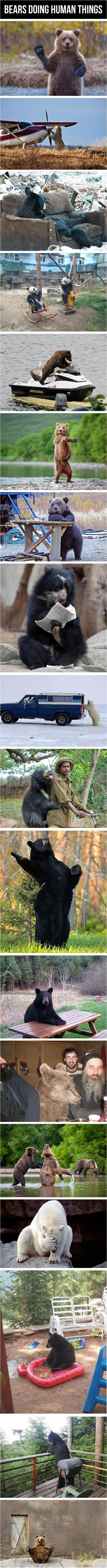 Bears doing human things. . BEARS DOING HUMAN THINGS Bears doing human things BEARS DOING HUMAN THINGS