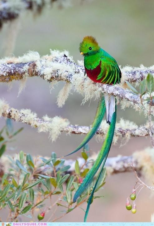Beautiful Birdy. . llam idk thought You may like it