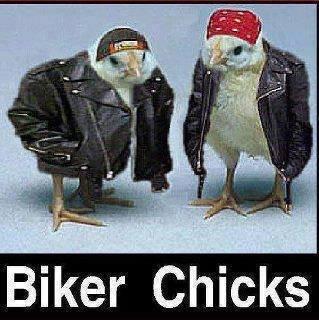 Biker Chick. Source: Imgur. Biker Chicks. Rollin Chicks Biker Chick Source: Imgur Chicks Rollin