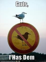 Bird With Guts. . ttll' Dem bird with guts f