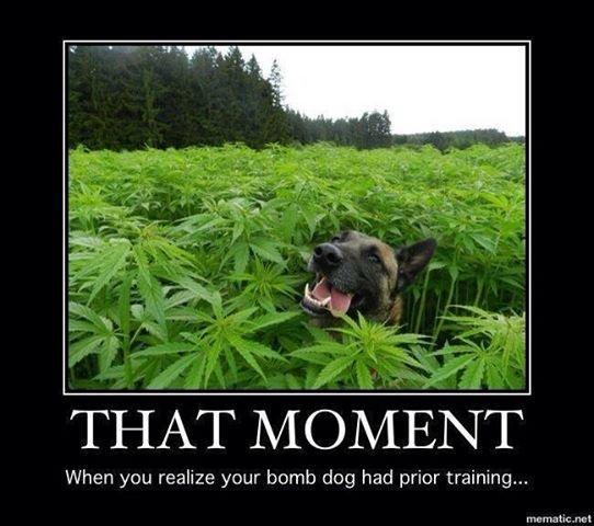 Bomb Dog's Past. . viii. shr : Dog weed funny