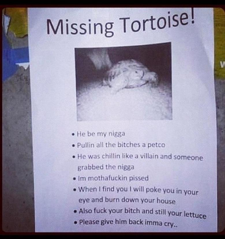 Boss Tortoise. Tortoise. taip, y, mathafuckin pissed I When I find You I will poke you in yum. tortoise