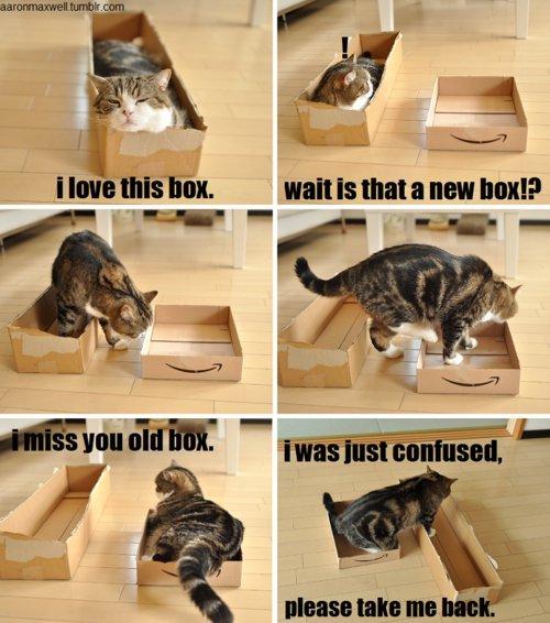Box cat. . Halt is um: um haul?. repost box cat lolcat
