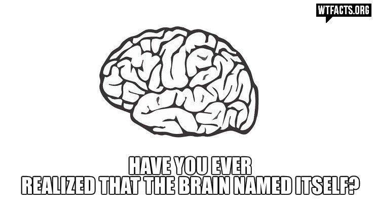 Brain. Not mine. Brain Not mine