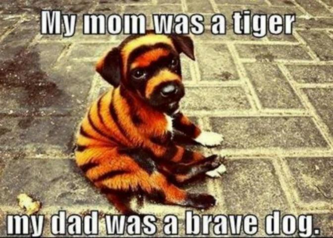 Brave, brave dog. Found this on tumblr. Brave brave dog Found this on tumblr