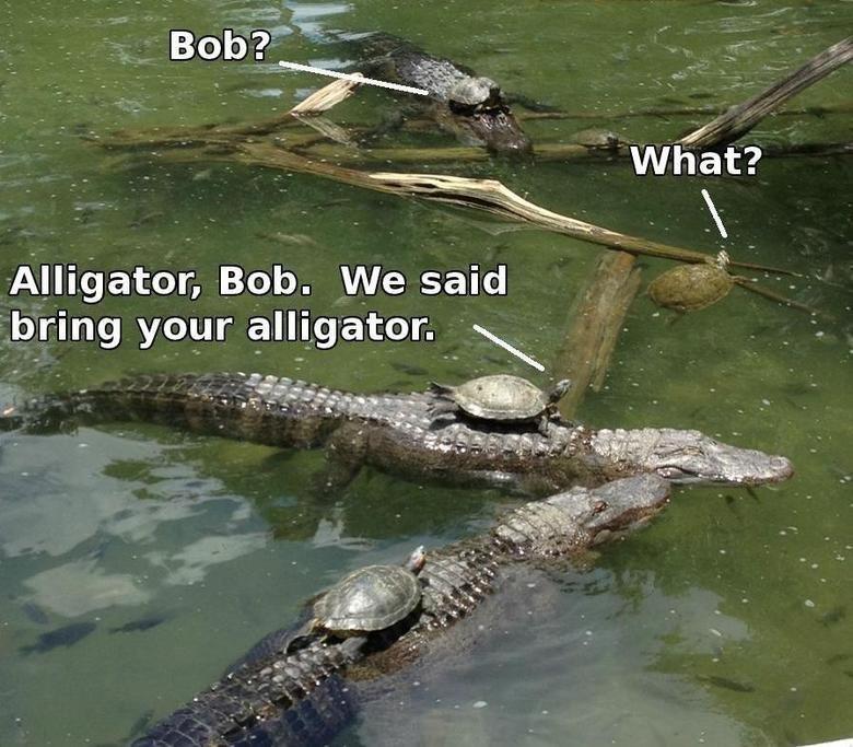 Bring ur alligator. . Alligator, Bob. We said bring your . oir. were they battling toads? Bring ur alligator Alligator Bob We said bring your oir were they battling toads?