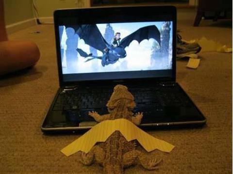 Budget dragon. It can dream all it wants but it's still just a lizard. Budget dragon It can dream all it wants but it's still just a lizard