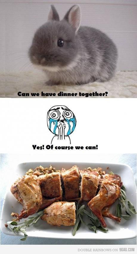 bunny. .. YOU CAN'T JUST FUKKEN EAT RABBITS bunny YOU CAN'T JUST FUKKEN EAT RABBITS