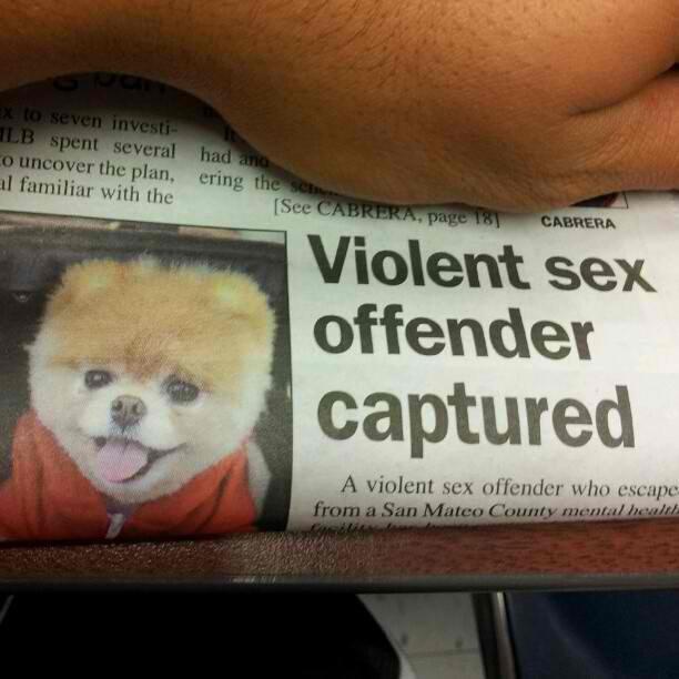 But he's so cute!. . A EEK !totman. they found my dog... Dog rapist