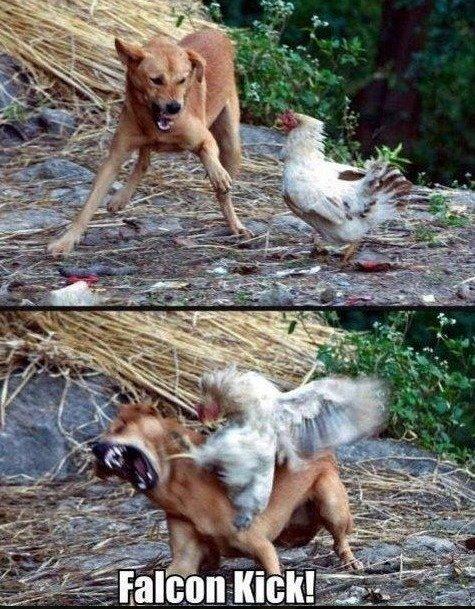 Falcon kick. before falcon punch there was... FALCON KICK. Falcon kick