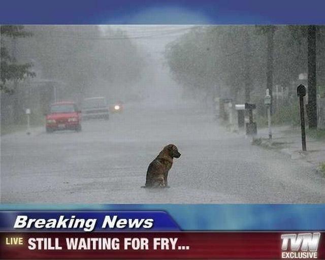 Feels. . Breaking News H I I Irr' STILL WAITING FOR FRY.... YOU OP!!! YOU!! Feels Breaking News H I Irr' STILL WAITING FOR FRY YOU OP!!! YOU!!