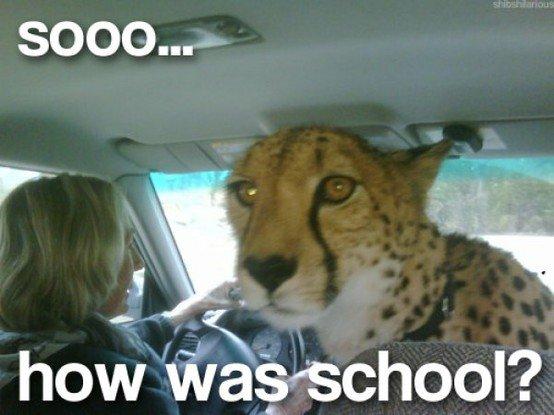 fine.. .. datgrass Cheetah