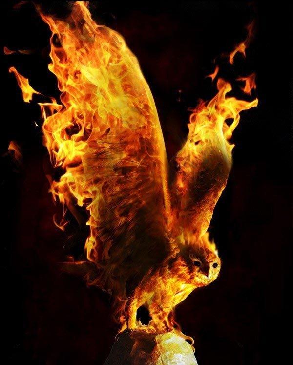 Fire Owl. Not mine.. so... it's a fowl? I'm so sorry are watching you