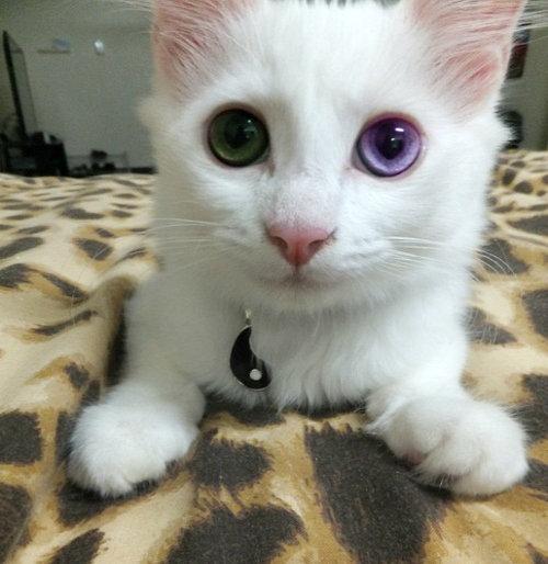 FJ Cat?. .. maybe now