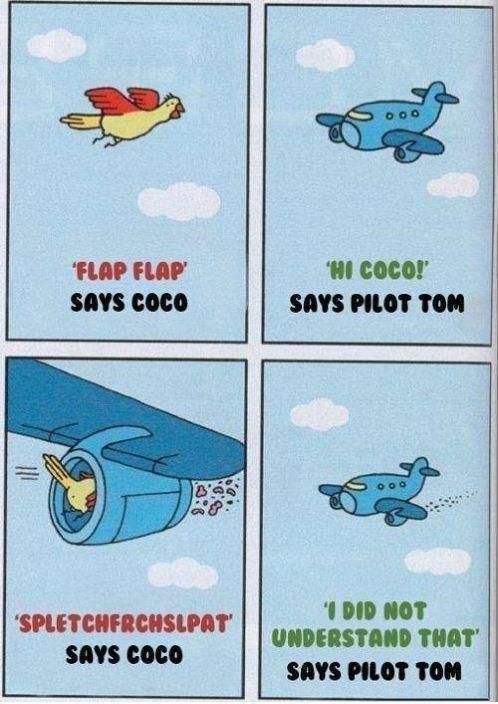 "Flap Flap (Says coco!). oh coco.... FLIP FIJI?' 'III ""latt' SIN PIG? 'MI. OH GOD WE'RE GOING DOWN!!!! says pilot Tom Bird dies shita"