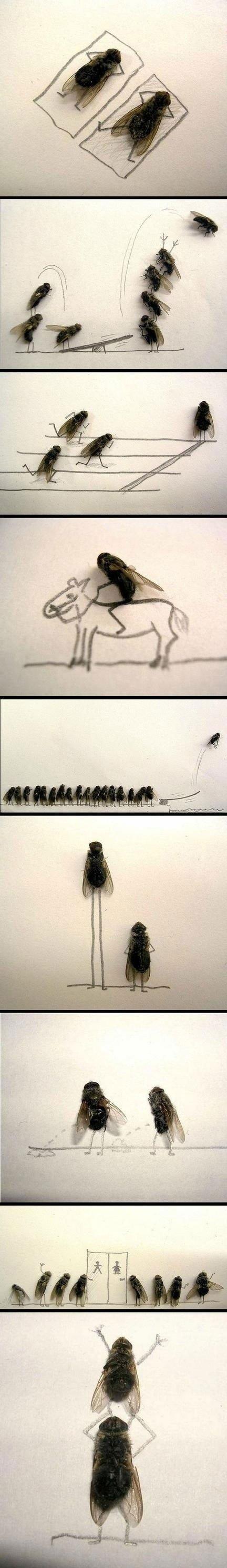 Fly art?. Uh yeah...I didn't do this but it's weird so..... Wierd..hobby? dead Fly flies Art weird WTF