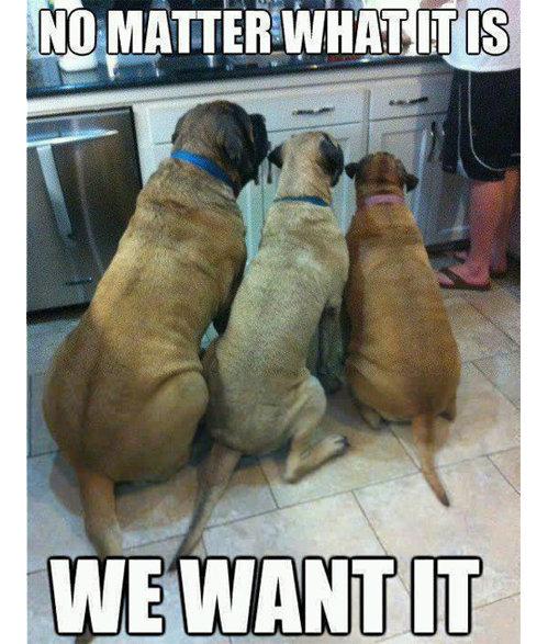 Food?. Hi.. repost gi Dogs funny bored