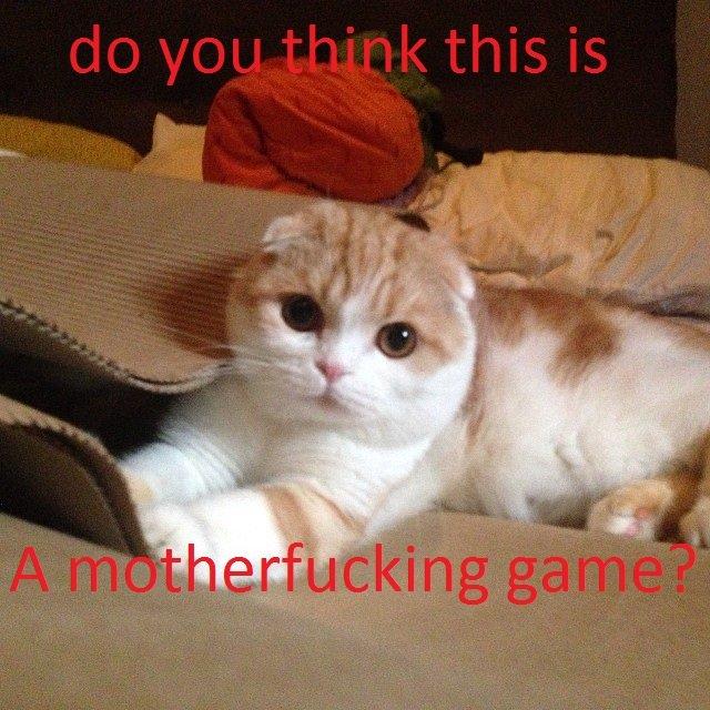 For the Kitties channel!. /channel/kitties. Cats kitties