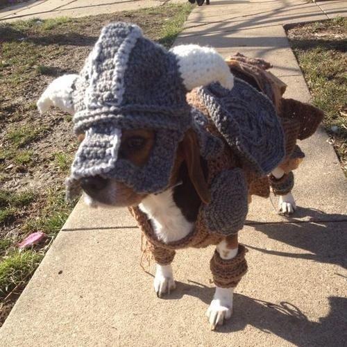 Fos Ro Dog. . Fos Ro Dog