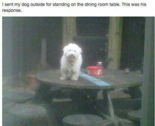 "Fuck da police. . I sent my dog , -"".'. far standing an the dining return tabla. This was his Fuck da police I sent my dog -"" ' far standing an the dining return tabla This was his"