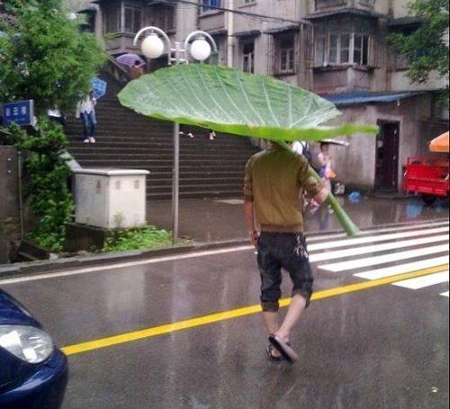 FUCK umbrellas. .. made me think of bug's life FUCK umbrellas made me think of bug's life
